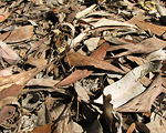 In Leaf Litter