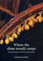 slime_mould_t